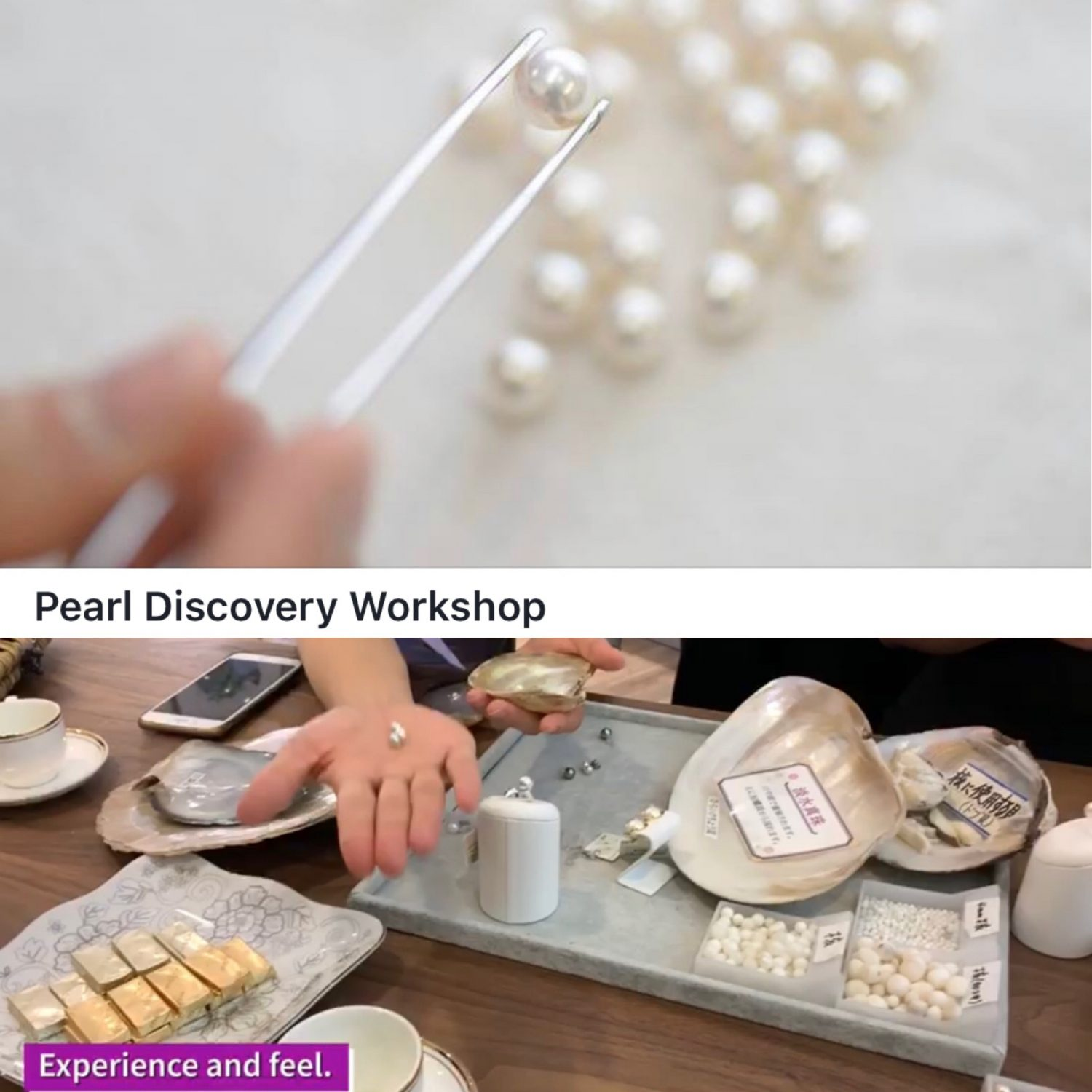 Pearl Discovery Workshop Start in Singapore シンガポールで真珠についてのWorkshop開始